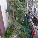 The front door area - before the gardeners.